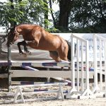 Defi du Thot - Champion de France 3 ans sport hongre - Ph. Maindru