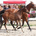 Gout du Risk au Pena - Champion foals mâles PFS - Ph. Maindru
